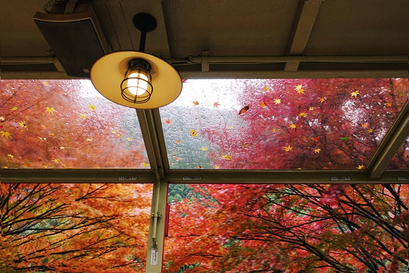 fall indoor air quality